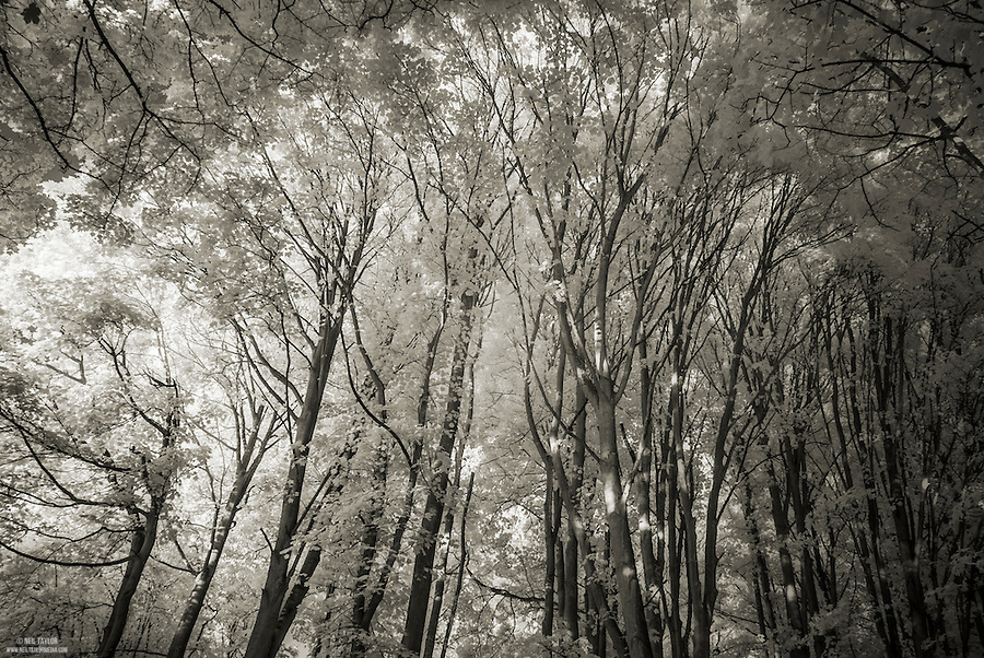 Infrared Trees in Loose Valley