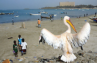 Senegal. Dakar. Ngor beach. Fishermen boats on the atlantic ocean. Children play games and football on the sand.  A pelican beats its wings.  At beach's end, the big tower block is an expensive hotel for tourists and business men. © 2000 Didier Ruef