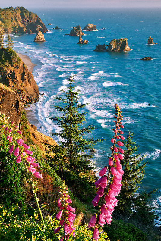 Foxglove and beach. Samuel H. Boardman State Scenic Corridor. Oregon