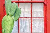 Red window with white curtin and cactus. Tucson. Arizona