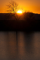 Bare branches spread in silhouette against the golden glow of a setting sun along San Francisco Bay.
