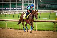 LOUISVILLE, KY - APRIL 30: Kentucky Derby contender, Gunnevera, gallops at Churchill Downs on April 30, 2017 in Louisville, Kentucky. (Photo by Alex Evers/Eclipse Sportswire/Getty Images)