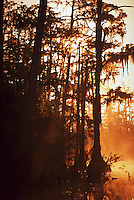 Sunrise fog at the forest's edge, cypress swamp, Okefenokee National Wildlife Refuge, Georgia