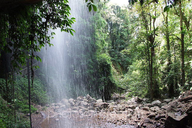 Crystal Shower Falls Dorrigo World Heritage National Park
