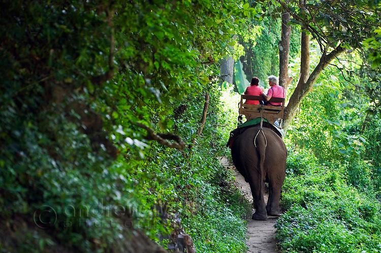 Tourist elephant ride through the jungle.  Chiang Dao, Chiang Mai province, THAILAND.