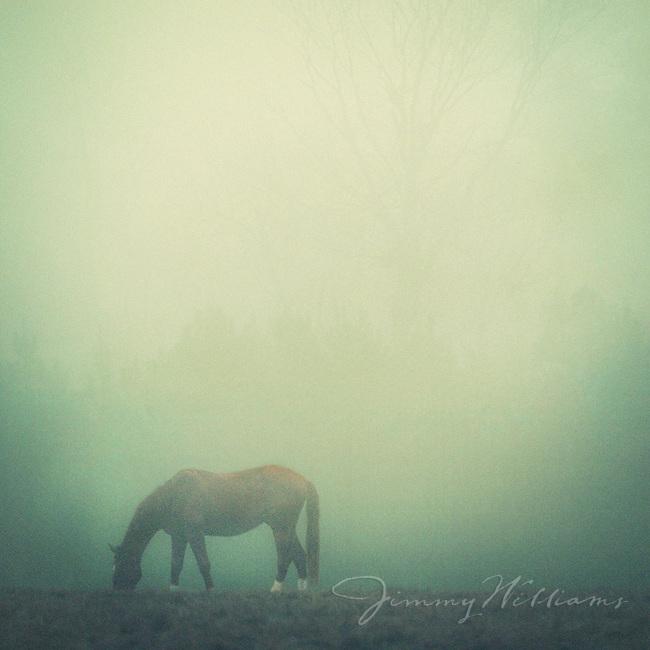 Horse grazing in a foggy field.