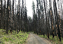 Scenery at Blewett Pass, in the Wenatchee Mountains featuring old burned forest and logging road. Stock photography by Olympic Photo Group