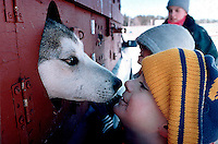 Sled dogs greet fans before the start of the 500-mile Beargrease Sled Dog Marathon in Duluth, MN.