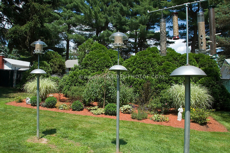 Variety of bird feeders and squirrel baffles in landscaped backyard and lawn