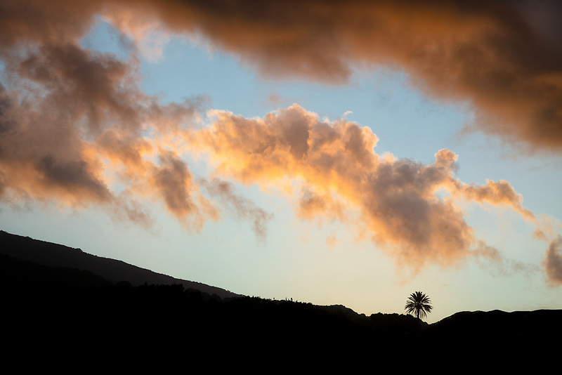 Lone palm tree with sunset clouds. Maui, Hawaii