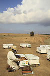 Israel, Bee hives in the Northern Negev