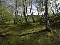 FOREST_LOCATION_90051