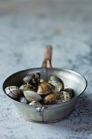 Gastronomie générale:  Palourdes - Stylisme : Valérie LHOMME