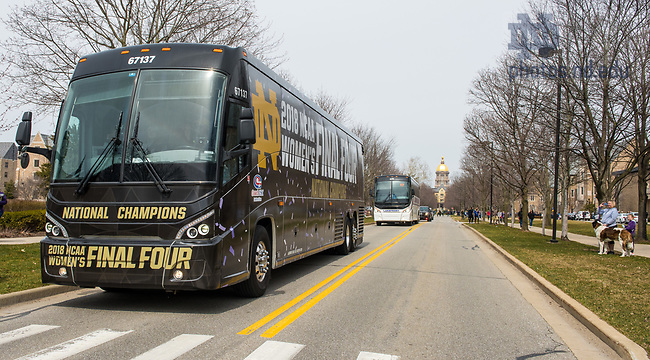 April 2, 2018; The Notre Dame women's basketball team bus departs down Notre Dame Avenue after a welcome home event following their win in the NCAA National Championship. (Photo by Barbara Johnston/University of Notre Dame)