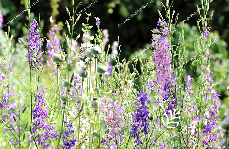 Myriad of pink purple and blue spring flowers stems in a meadow - Free nature stock image.