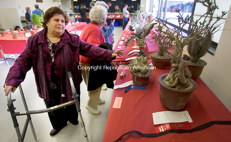 WATERBURY CT. 05 April 2014-040514SV05-Margareta Prifti of Waterbury enjoys looking over the cactus entries at The Connecticut Cactus and Succulent Society show at Naugatuck Valley Community College in Waterbury Saturday. The Society held its 31st annual show and sale Saturday and continues Sunday 10 a.m. to 4 p.m. <br /> Steven Valenti Republican-American