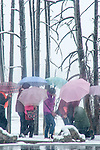 Tourists to Yellowstone National Park carry colorful umbrellas to protect them from the snow. Tourists walk with umbrellas during a brief snow shower in Yellowstone National Park.