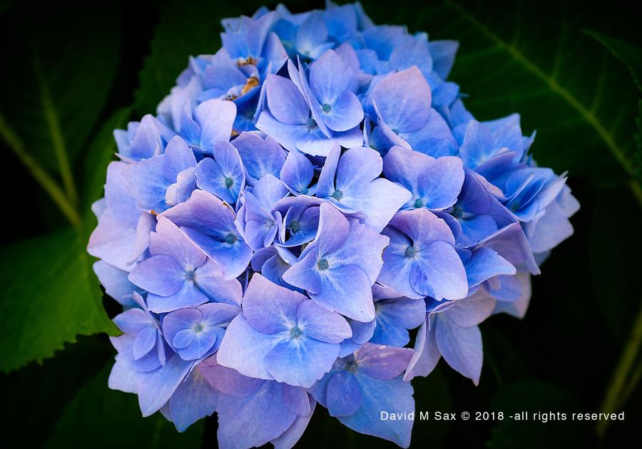 6.25.17- Blue....