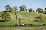 A new metal Aermotor, model 802 sits at the top of a wooden tower ready to water the nearby cattle, Sierra Nevada Foothills of California.