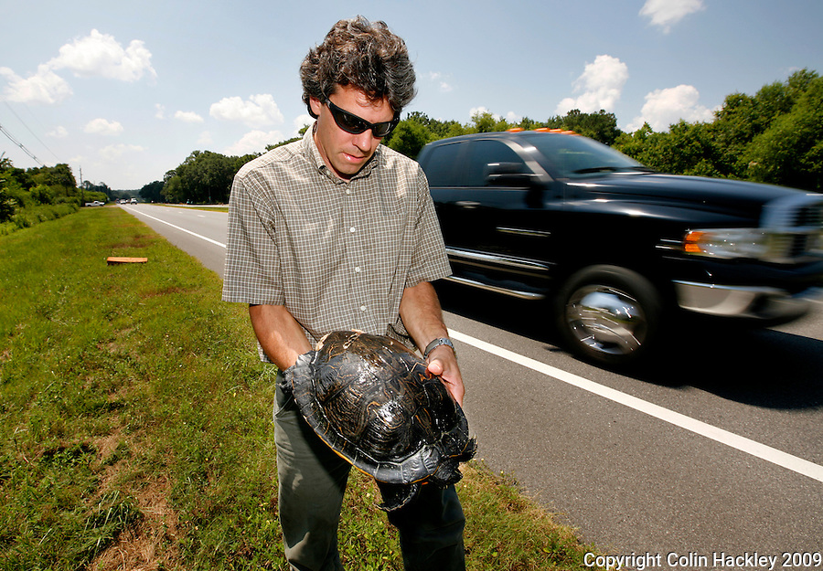 TALLAHASSEE, FLA. 6/24/09-ECOPASSAGE CH01-Matt Aresco, a wildlife biologist with the Lake Jackson Ecopassage, holds the carcass of a female Suwannee Cooter turtle he found on the edge of US Highway 27, June 24, 2009 in Tallahassee. Aresco has been working for years to have Florida DOT build a series of culverts so turtles and other animals can safely cross under the road. The project, he says, will protect motorists and animals alike. The project has recently come into the national spotlight after U.S. Sen. Tom Coburn, R-Okla., questioned using federal money to help fund it. ..COLIN HACKLEY PHOTO