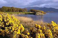 Arena feature<br /> Resplendent with natural gorse the third green and 4th tee box on the Killeen Course at Killarney Golf Club which is nearing completion. <br /> Picture by Don MacMonagle