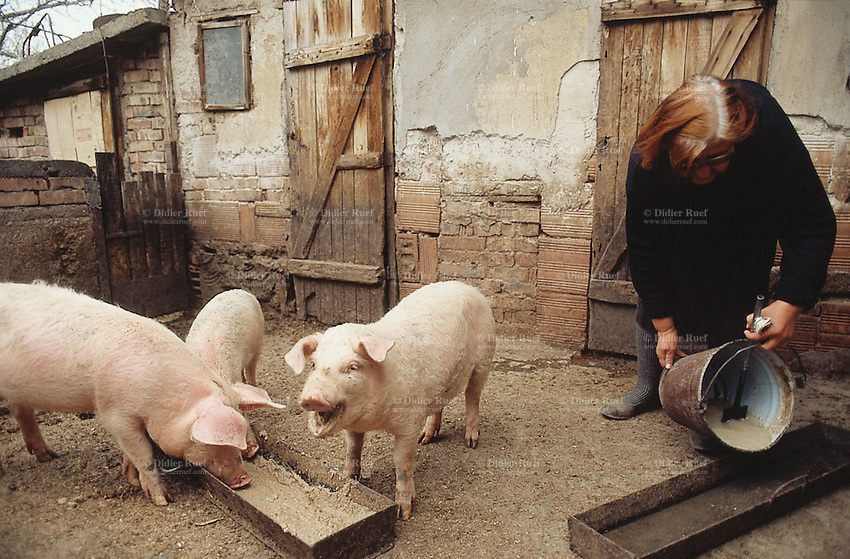 Bulgaria. Province Oblast Lovech. Lukowit. Domka, an old woman, is feeding her pigs in the early morning.  © 1997 Didier Ruef