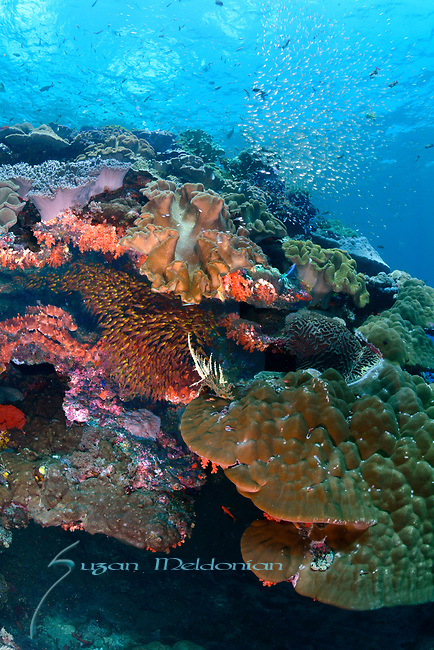 Colorful Reef , Nusa Penida, Indonesia