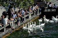 Seeufer bei der Quaibrücke, Zürich, Schweiz