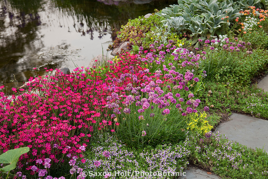 Flowering perennial groundcovers (Dianthus, Thyme, Armeria) edging pond in Barrington Hills, Illinois garden