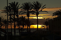 Back lit palms and buildings from the sun setting in Playa de las Americás. Tenerife, Canary Islands, Spain
