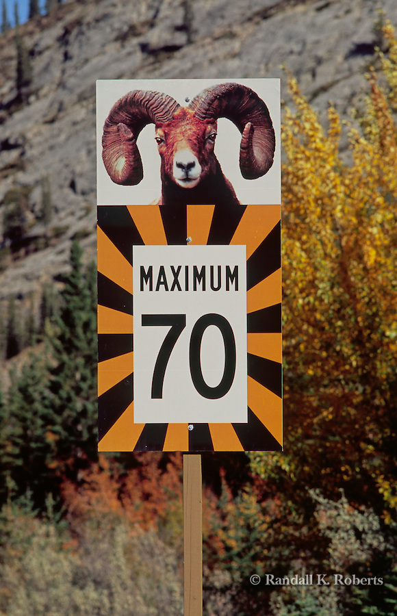 A road sign warns motorists of big horn sheep crossing the highway in Banff National Park, Alberta, Canada.
