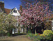 Tom Mackie, FLOWERS, photos, Cathedral Close in Spring, Norwich, Norfolk, England, GBTM892080-2,#F# Garten, jardín