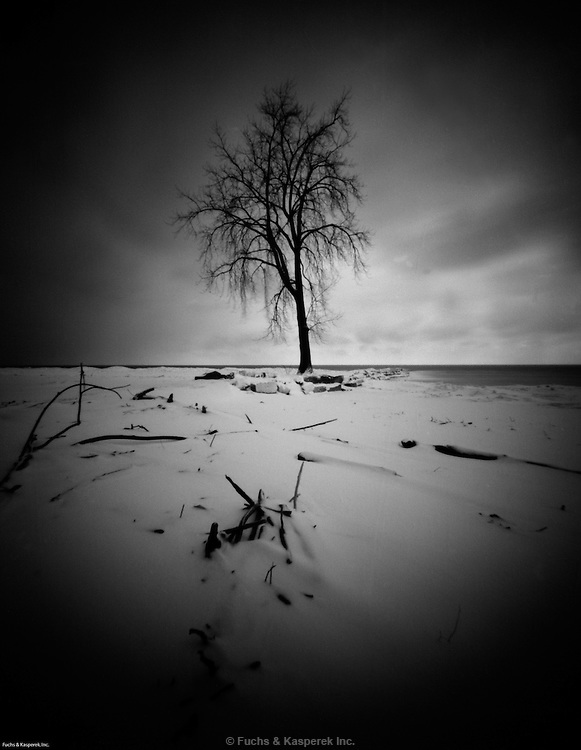 A sentinel tree guards the beach in winter at the Huntington Reservation of the Cleveland Metroparks in Bay Village, Ohio
