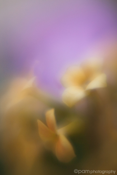 Impressionistic style of yellow flowers on purple background