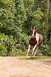 20110813 Paint Horses