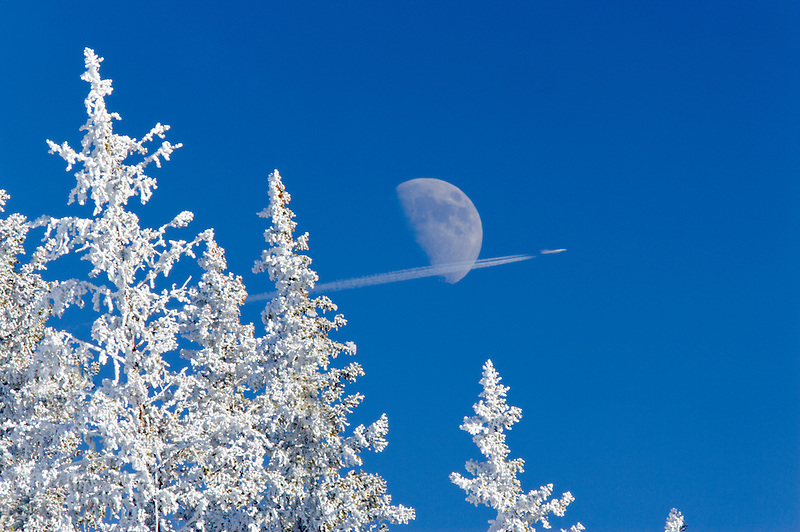 Hoar frost on trees with moon and jet. Elkhorn Drive National Scenic Byway. Oregon