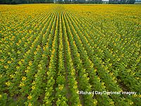 63801-11408 Sunflower field-aerial Jasper Co.  IL