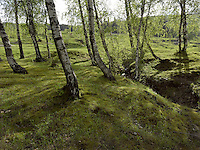 FOREST_LOCATION_90028