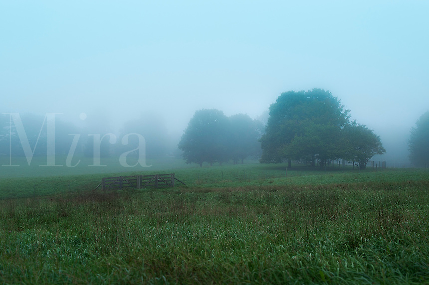 Field and trees shrouded in mist, Delaware, USA
