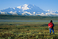Hiker enjoys view of North America's highest mountain, summer, McKinley river bar, Denali National Park, Alaska