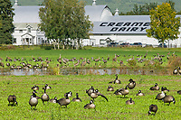 Creamer's Field