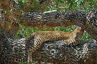 3_Sri Lanka_Wildlife
