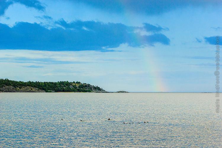 Regnbåge vid havets horisont i Stockholms skärgård.