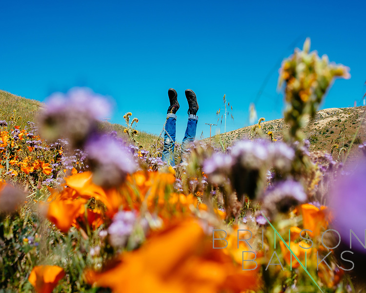 Antelope Valley Flower Fields