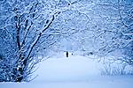 Tree tunnel in winter scene