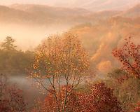 Autumn foliage revealed through the morning mist in the Smoky Mountains.