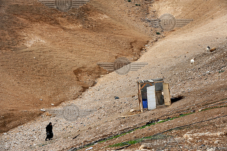 A woman walks up a hill next to a makeshift structure and a small herd of goats in the unrecognised encampment of the Jahalin tribe along the Jerusalem - Jericho road in a part of the West Bank under Israeli control.