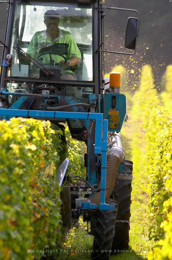 Trimming leaves and branches off the vines. Chateau de Tracy, Pouilly sur Loire, France
