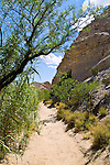 The Hot Springs Trail along the Rio Grande in the southeast corner of Big Bend National Park. The 3 mile path passes especially abundant desert plant life, at first crossing a plateau above the river which flows through a short, deep canyon below, traversing several side ravines before descending to the waters edge at the hot springs themselves, then continuing on to the remains of a small village founded in 1909.<br /> The springs, a few yards from the rivers edge, are enclosed in a brick wall creating a small bathing pool. The pool still receives quite a few visitors who enjoy the clear 105&deg; waters.