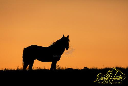 Mustang, orange sunset